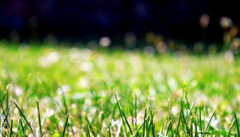 Você sabe qual o melhor método de irrigação para o seu jardim? 4