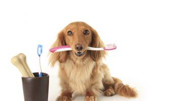 Dia nacional dos animais: veja os principais cuidados a serem tomados com a higiene do seu pet 2