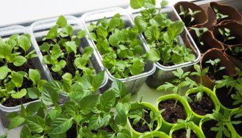 Plantio de hortaliças em casa: saúde ao alcance das mãos 7