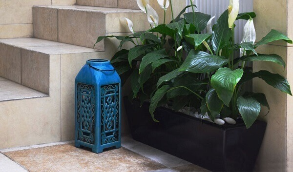 plantas-jardineira-com-lirio-da-paz