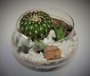 Decoração com plantas: Como deixar o ambiente mais aconchegante? 2