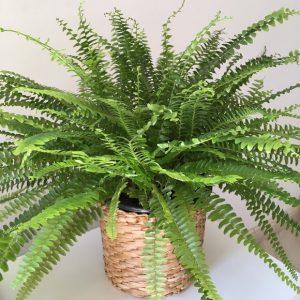 Decoração com plantas: Como deixar o ambiente mais aconchegante? 3