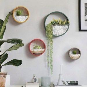 Decoração com plantas: Como deixar o ambiente mais aconchegante? 4