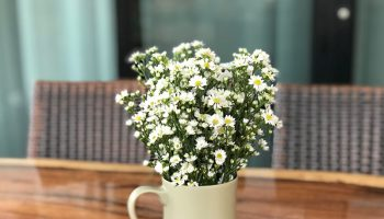 6 plantas e flores para se cultivar no verão 10