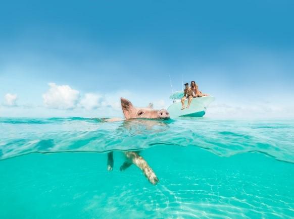 Ilhas das Bahamas oferecem experiências luxuosas para brasileiros passarem a quarentena 3